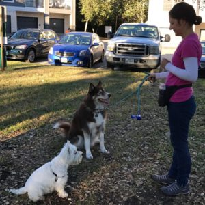Dog Training in Austin, TX